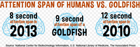 human-vs-goldfish