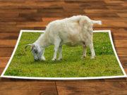image-editing-program-3d-modeling-photoshop-frame-perspective