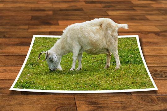 image-editing-program-3d-modeling-photoshop-frame-perspective-mobile-app-design-trends
